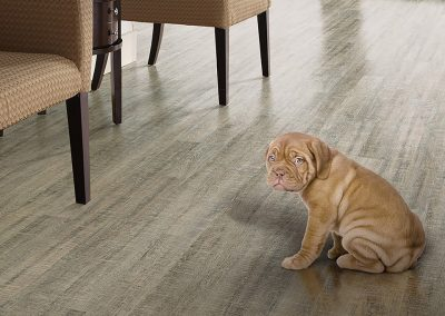 Pet Friendly Flooring Columbus OH Shaw