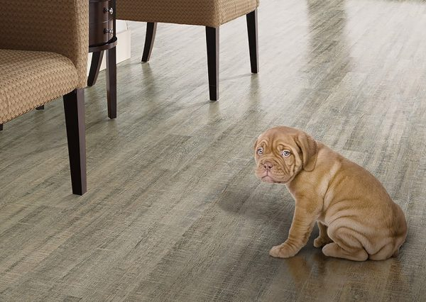 Pet Friendly Flooring Columbus OH Shaw